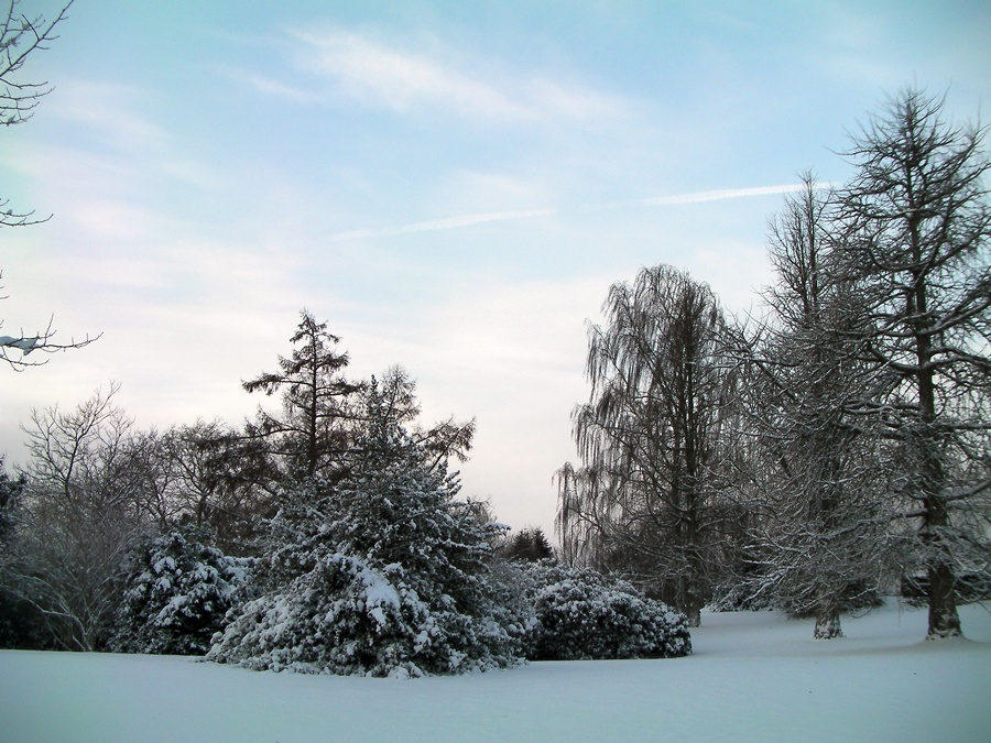 Winter_SANY0252_2009.12.18.JPG