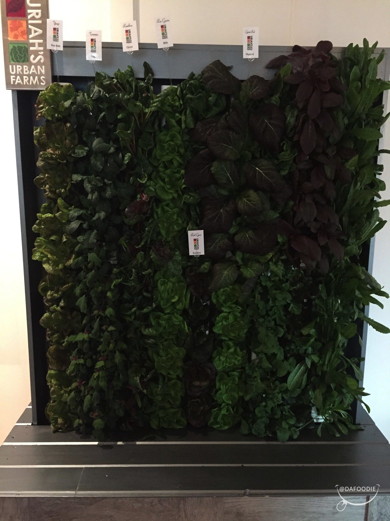 The Herb structure inside the restaurant.