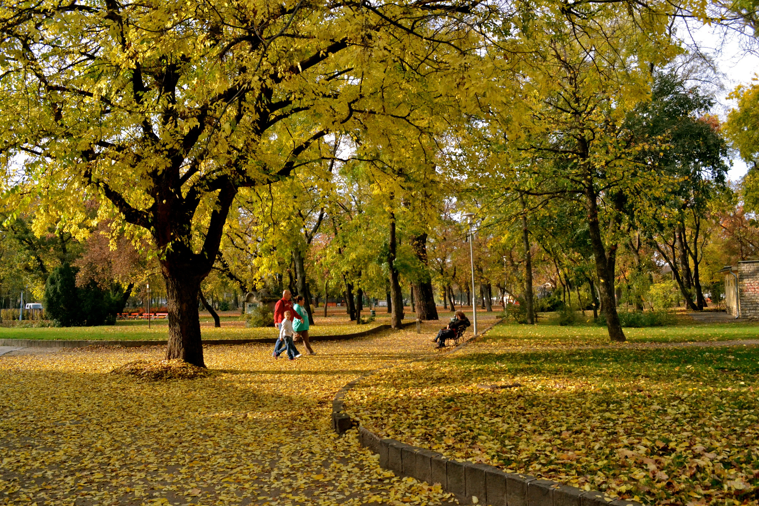 Fall colors at City Park.