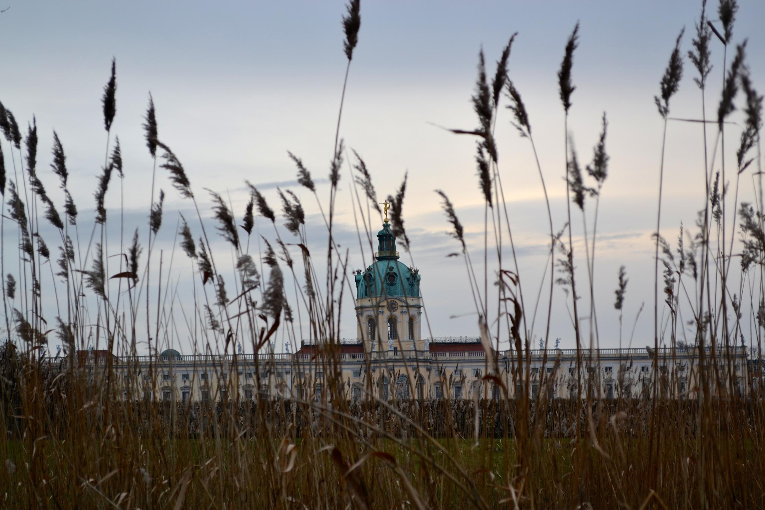 A view of Schloss Charlottenburg through the reeds.