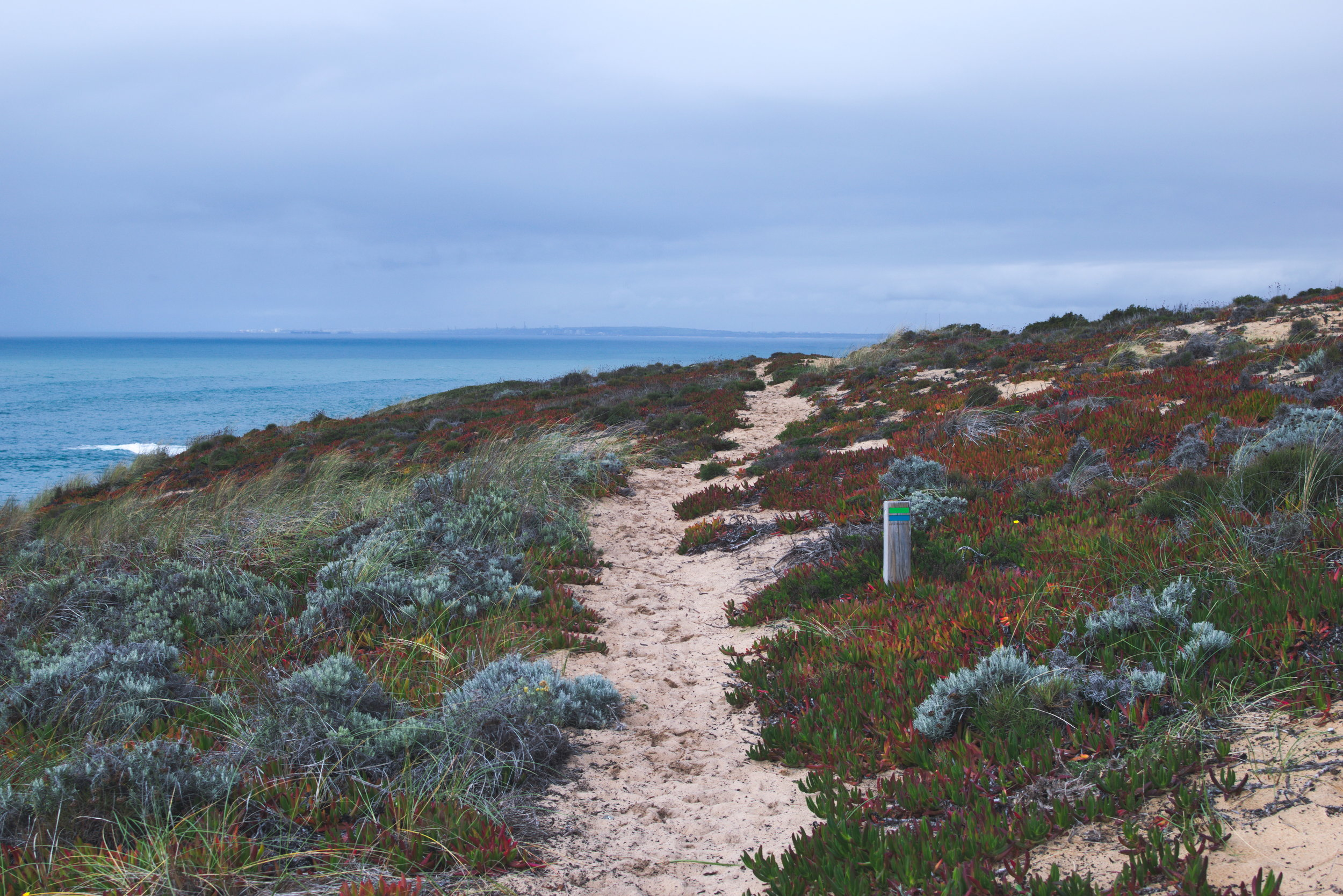 A typical trail along the Rota Vicentina -- well-marked and easy to discern.
