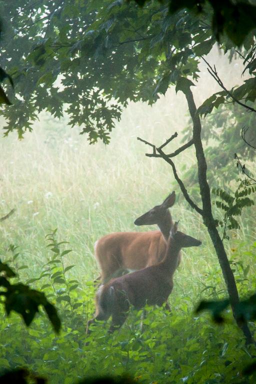 VA NVA scenery & deer -340.jpg