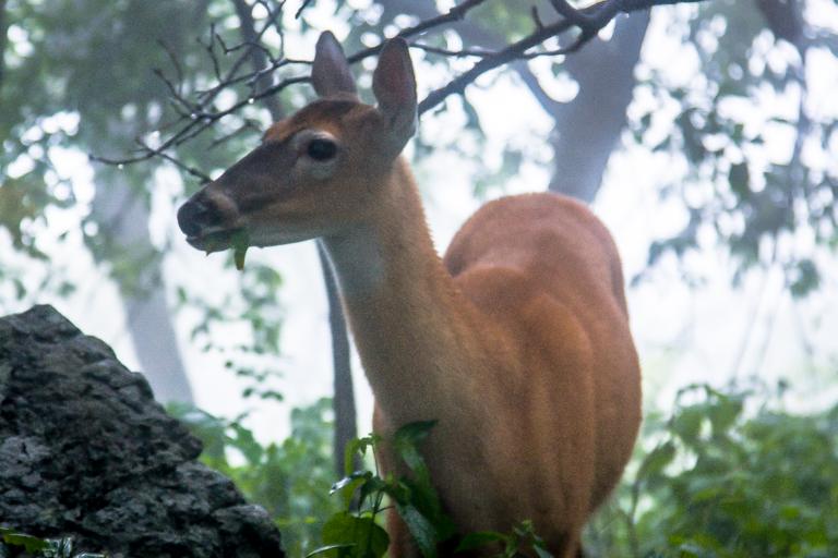 VA NVA scenery & deer -334.jpg
