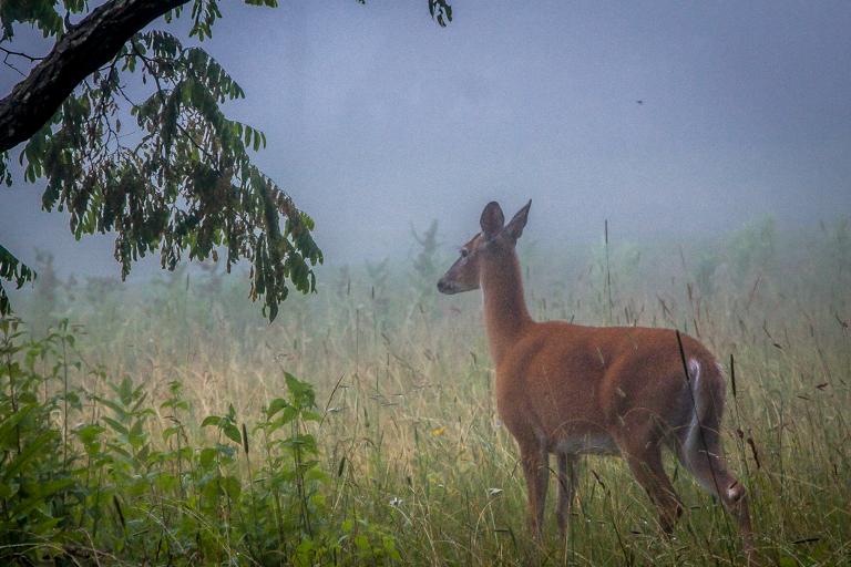 VA NVA scenery & deer -341.jpg