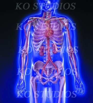 Glowing anatomy figure