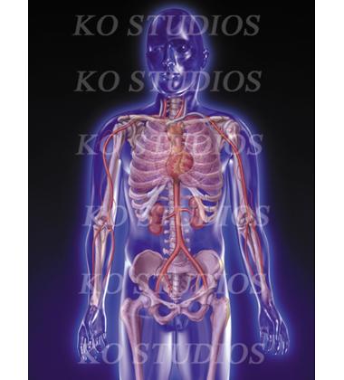 Cardio-thoracic Figure