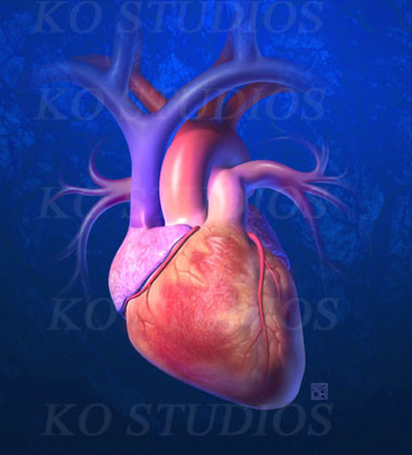 3D Heart 2007