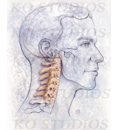 Lateral Spine in Pencil Style
