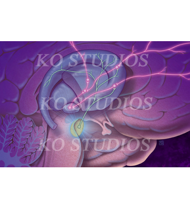 Brain molecules