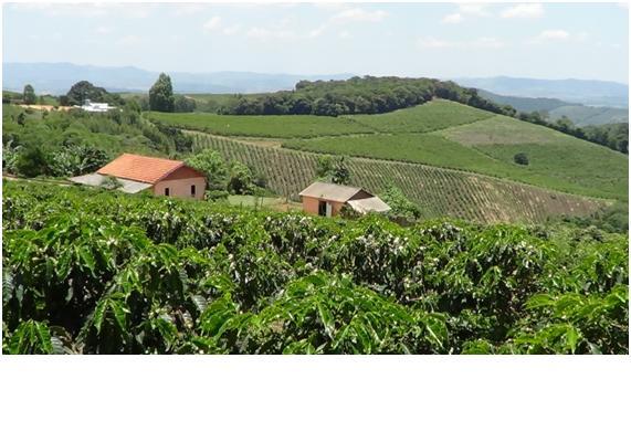 The farm of Maurillo Braz Borges.