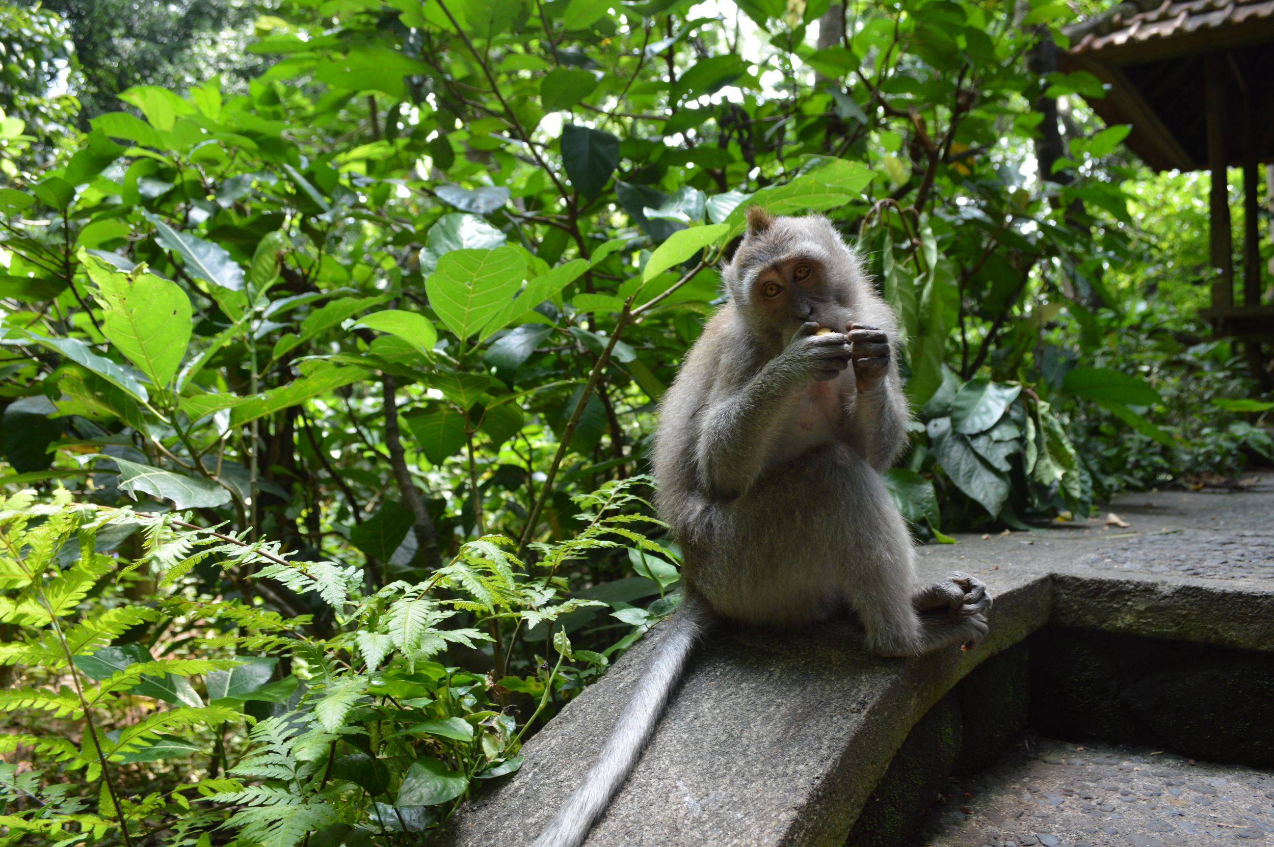 Monkey Forest in Ubud.