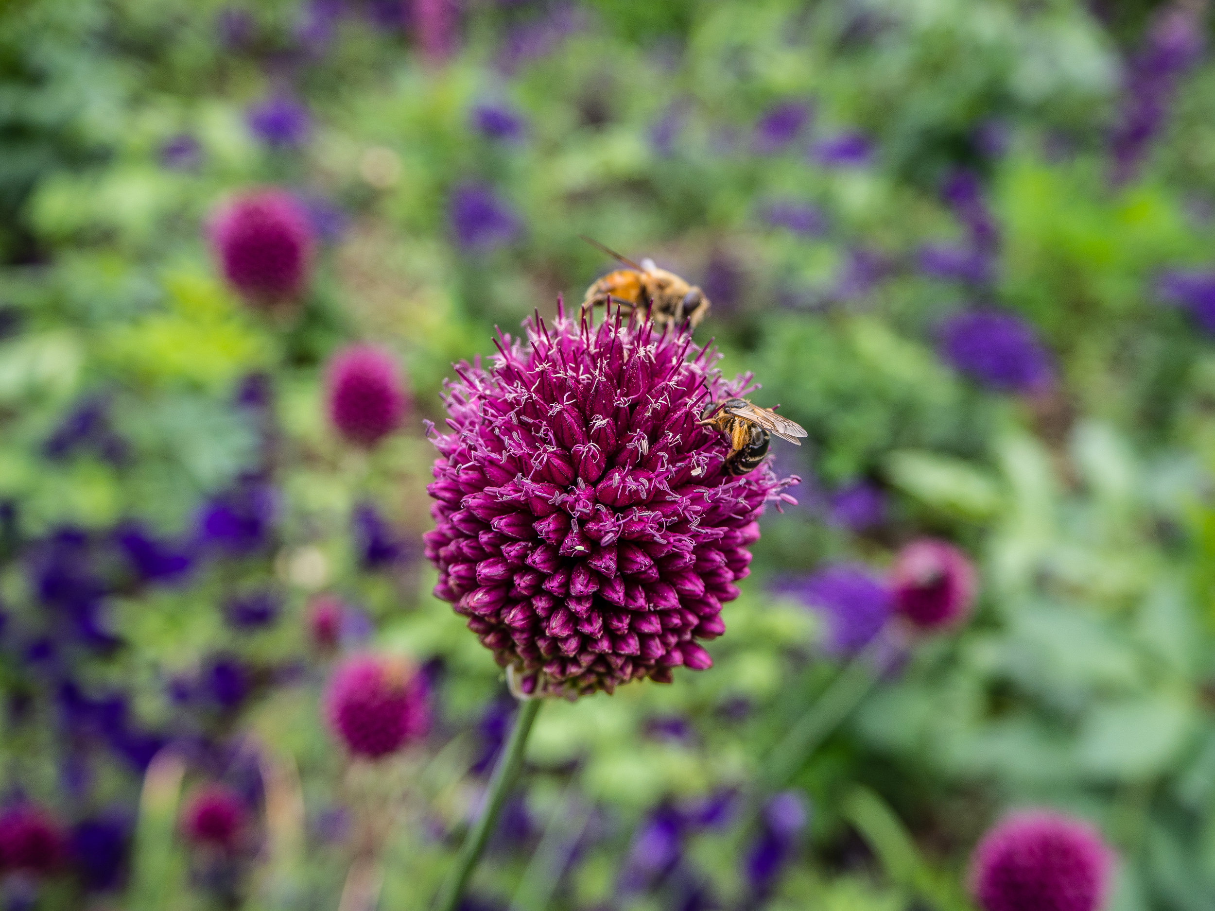 Giverny and Vernon - France - June 2017-18.jpg