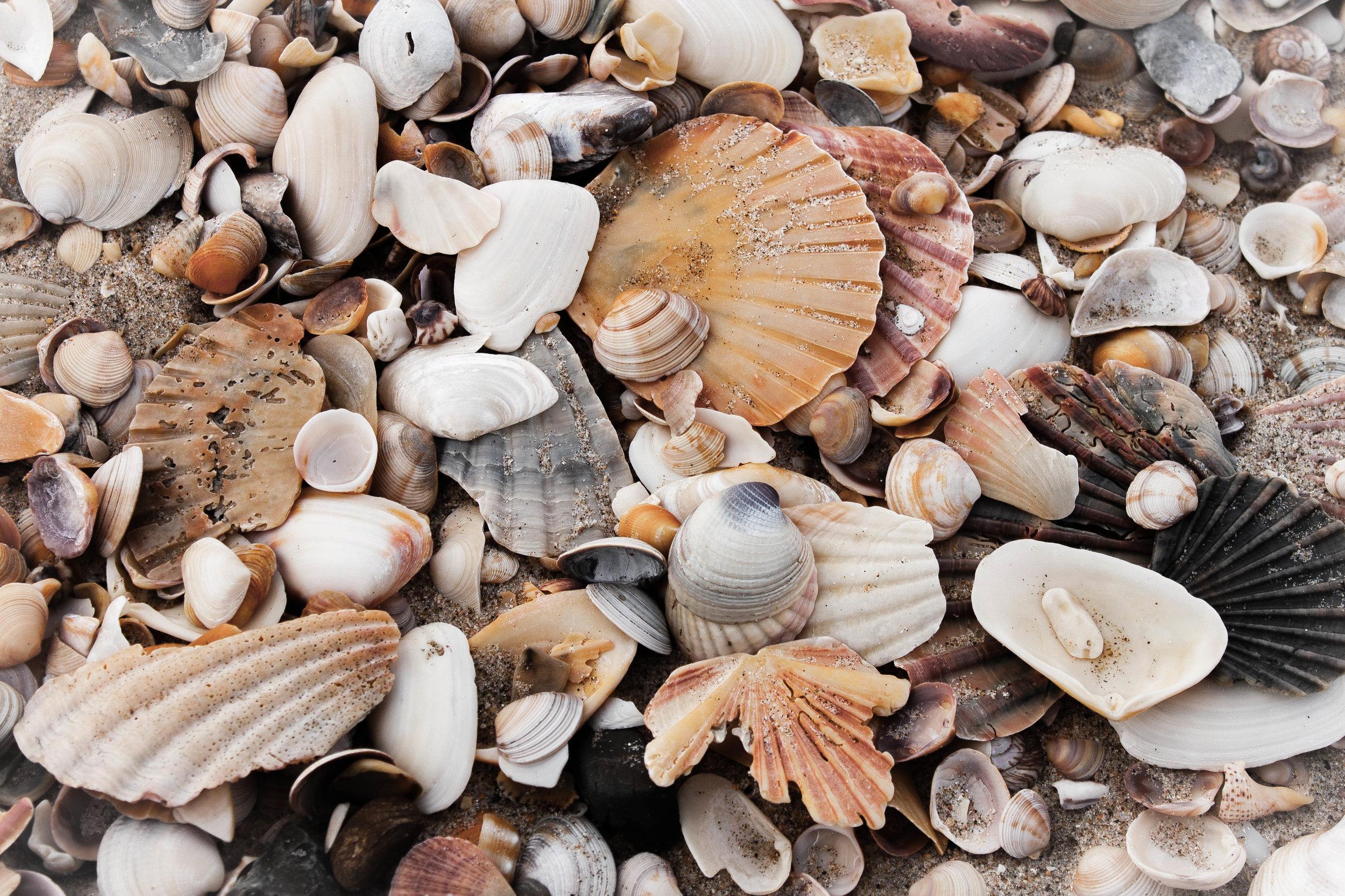 Shell detail - Retro Warm preset.jpg