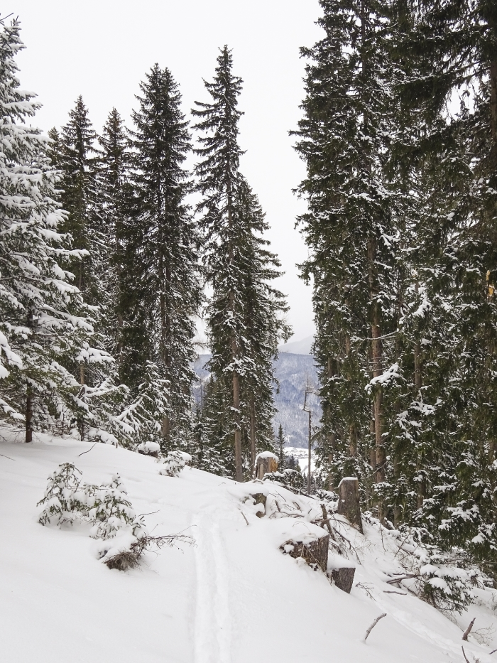 Hochwurzen, Rohrmoos/Schladming, Steiermark