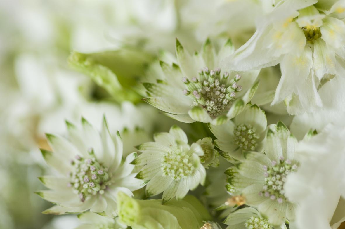 Hochzeitsblumen-18.jpg