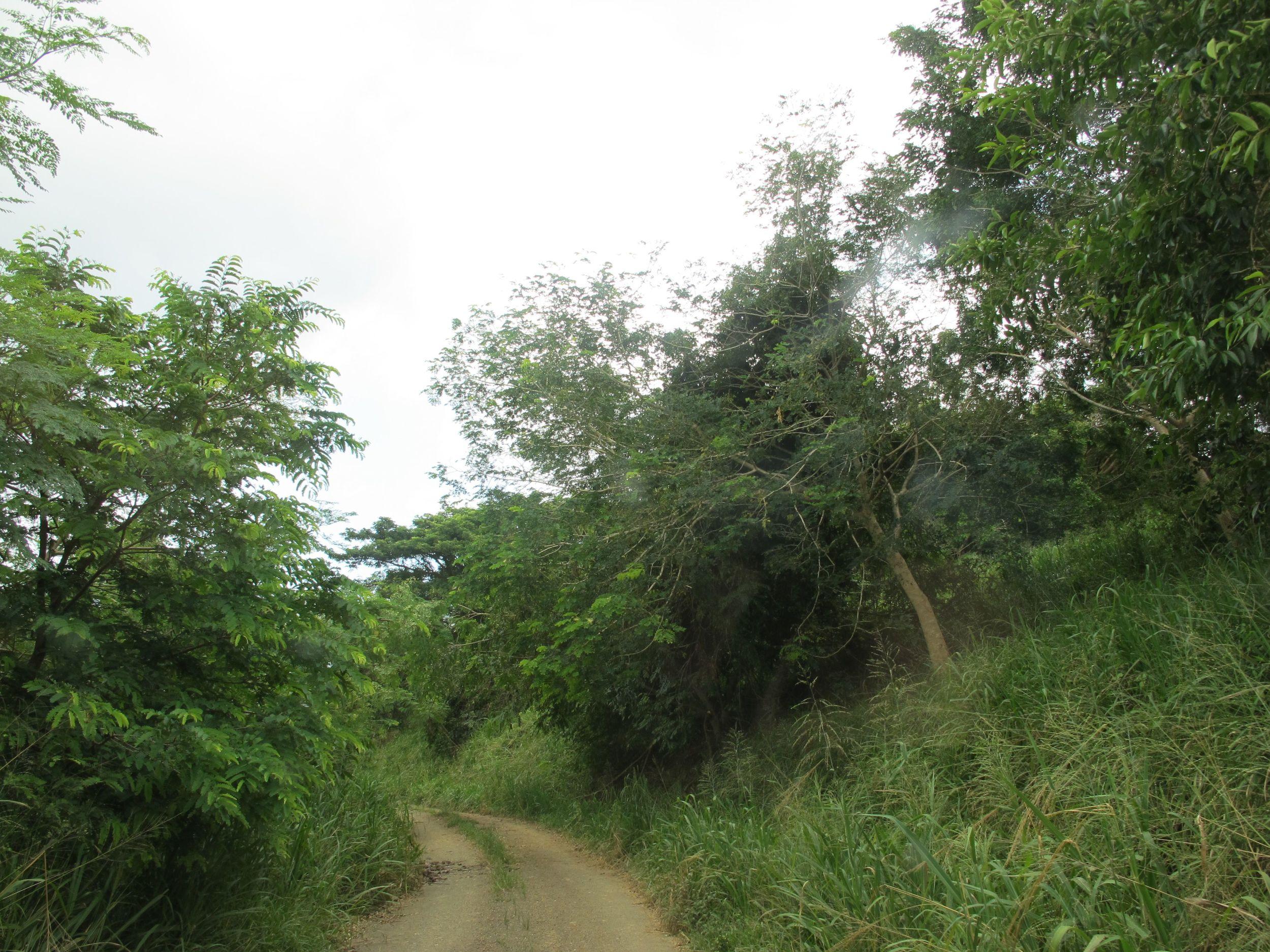 rainforest road.jpg