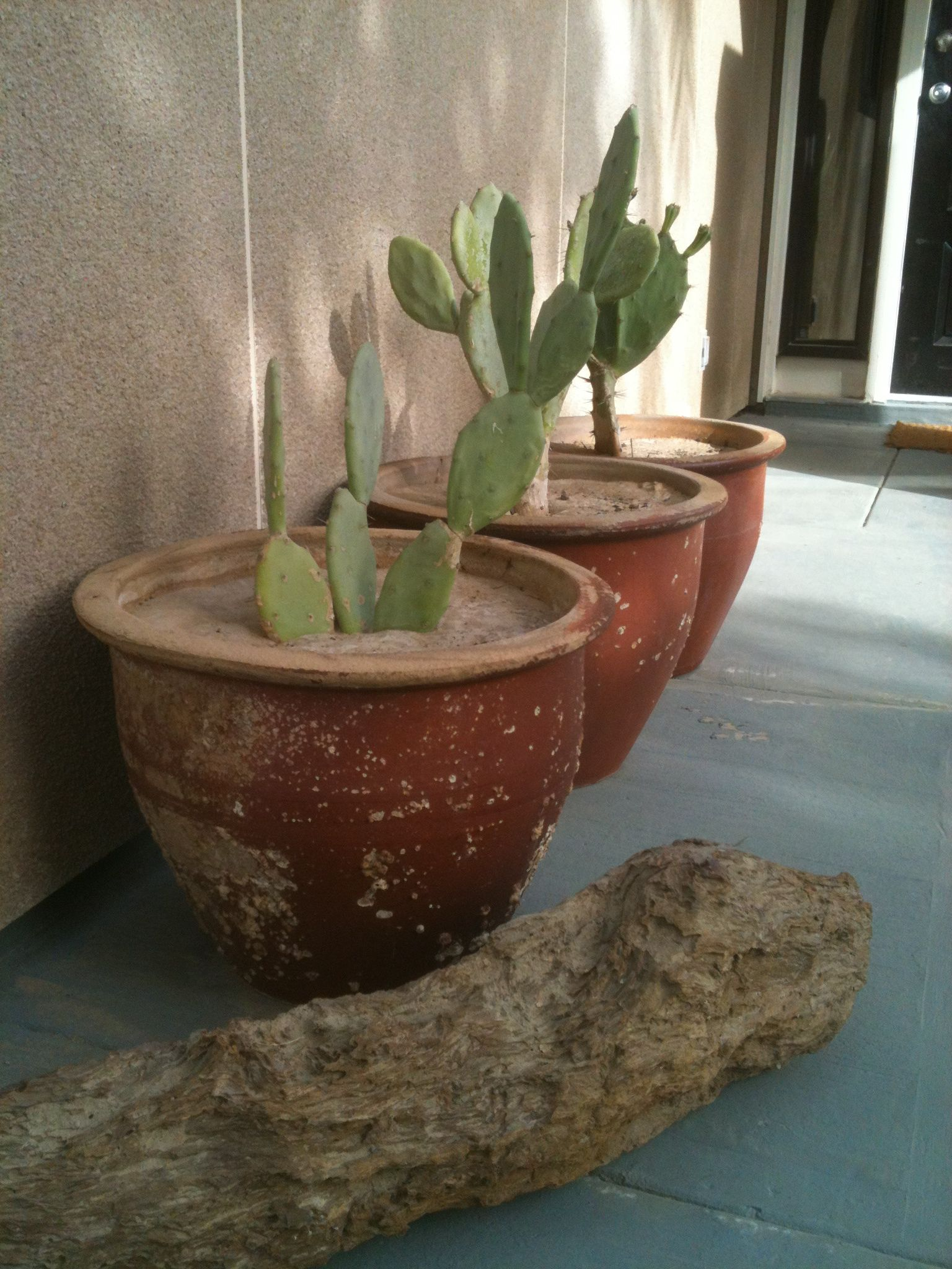 petrified wood cactus.jpg