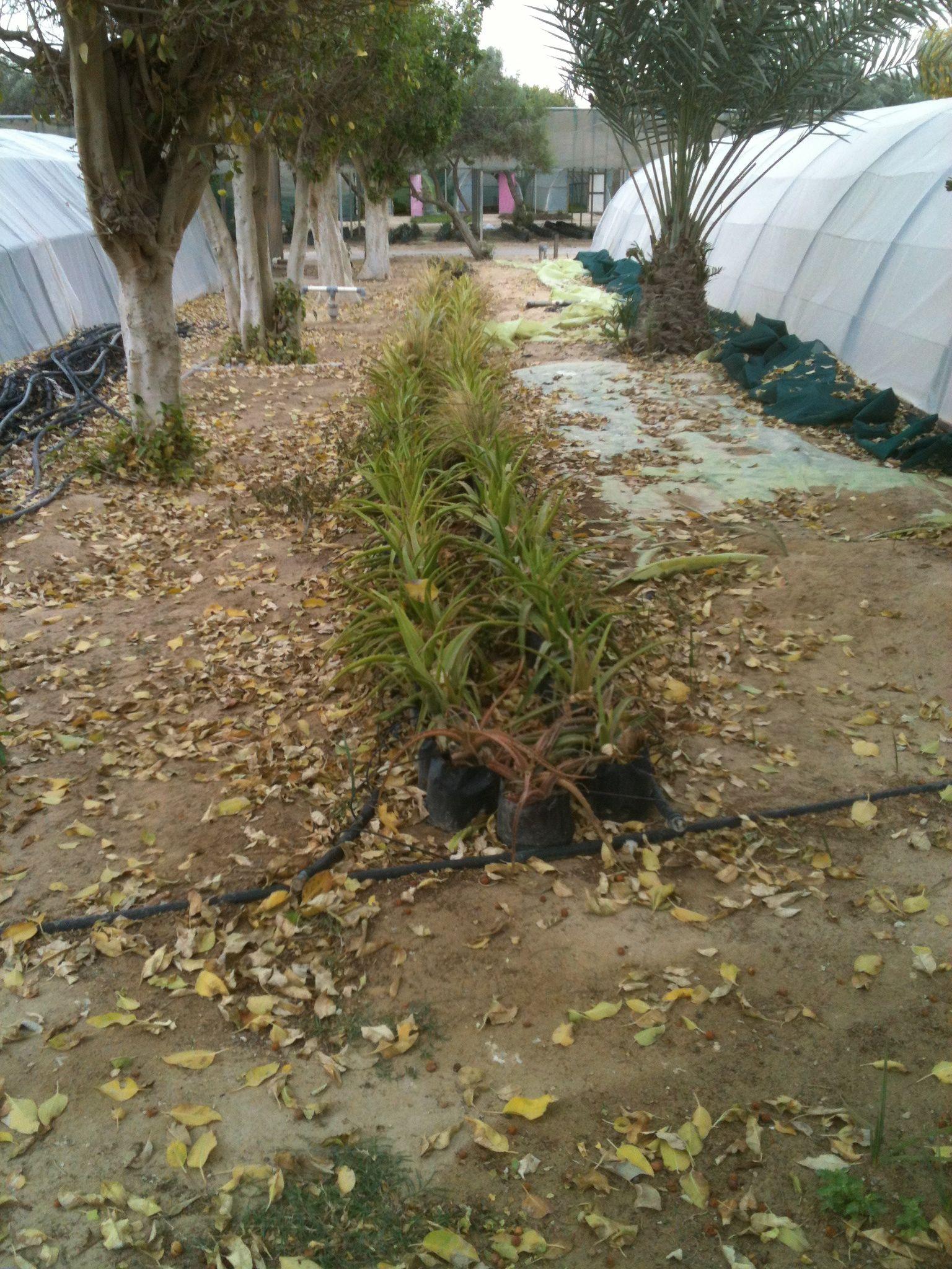 gardening center.jpg