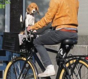 dog in basket.jpg