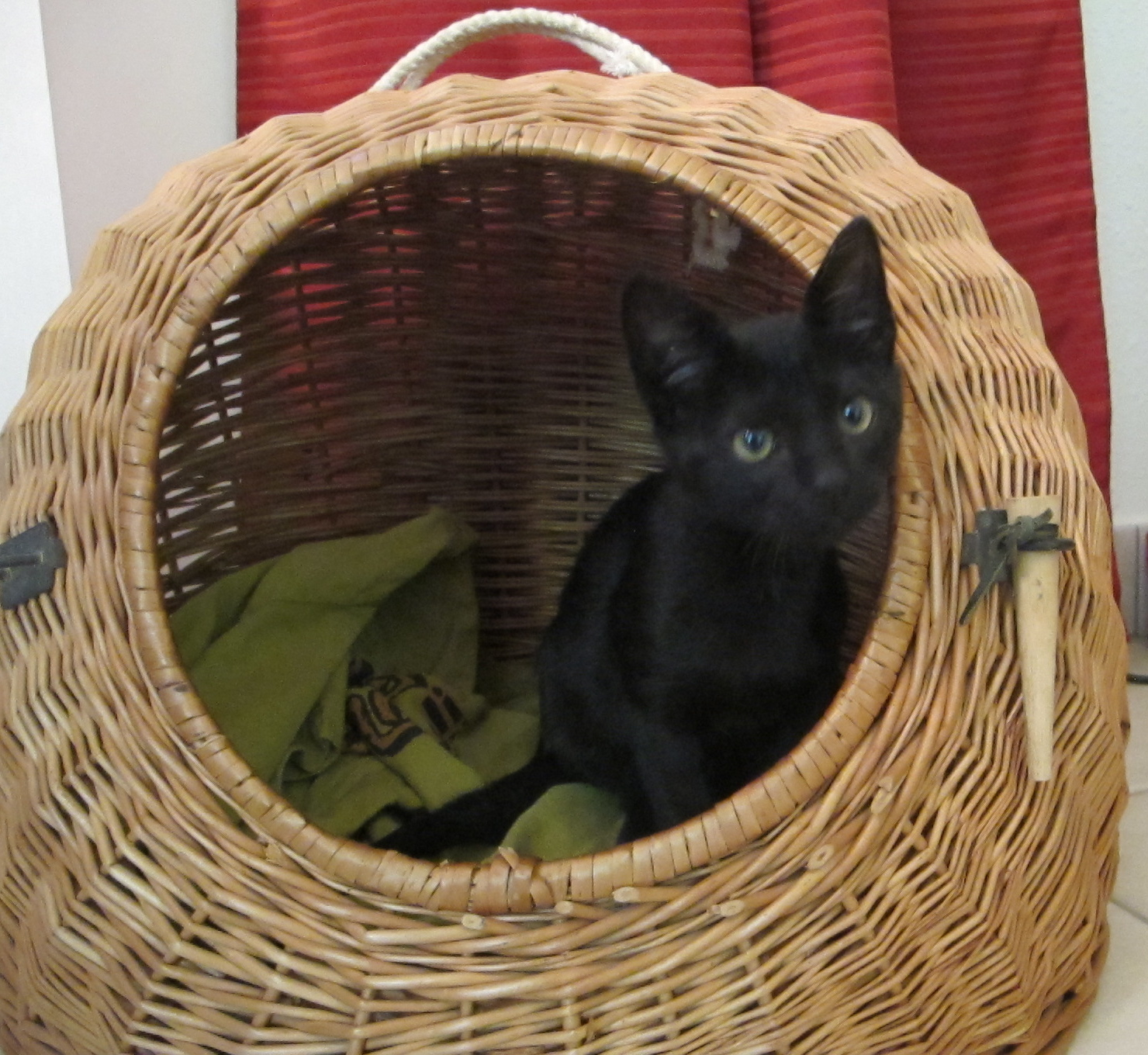 kitten basket.jpg