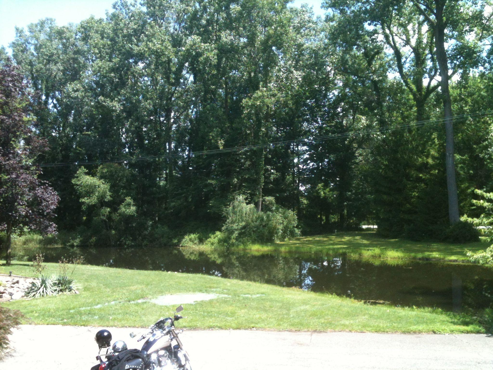 The pond at Scotts Fox