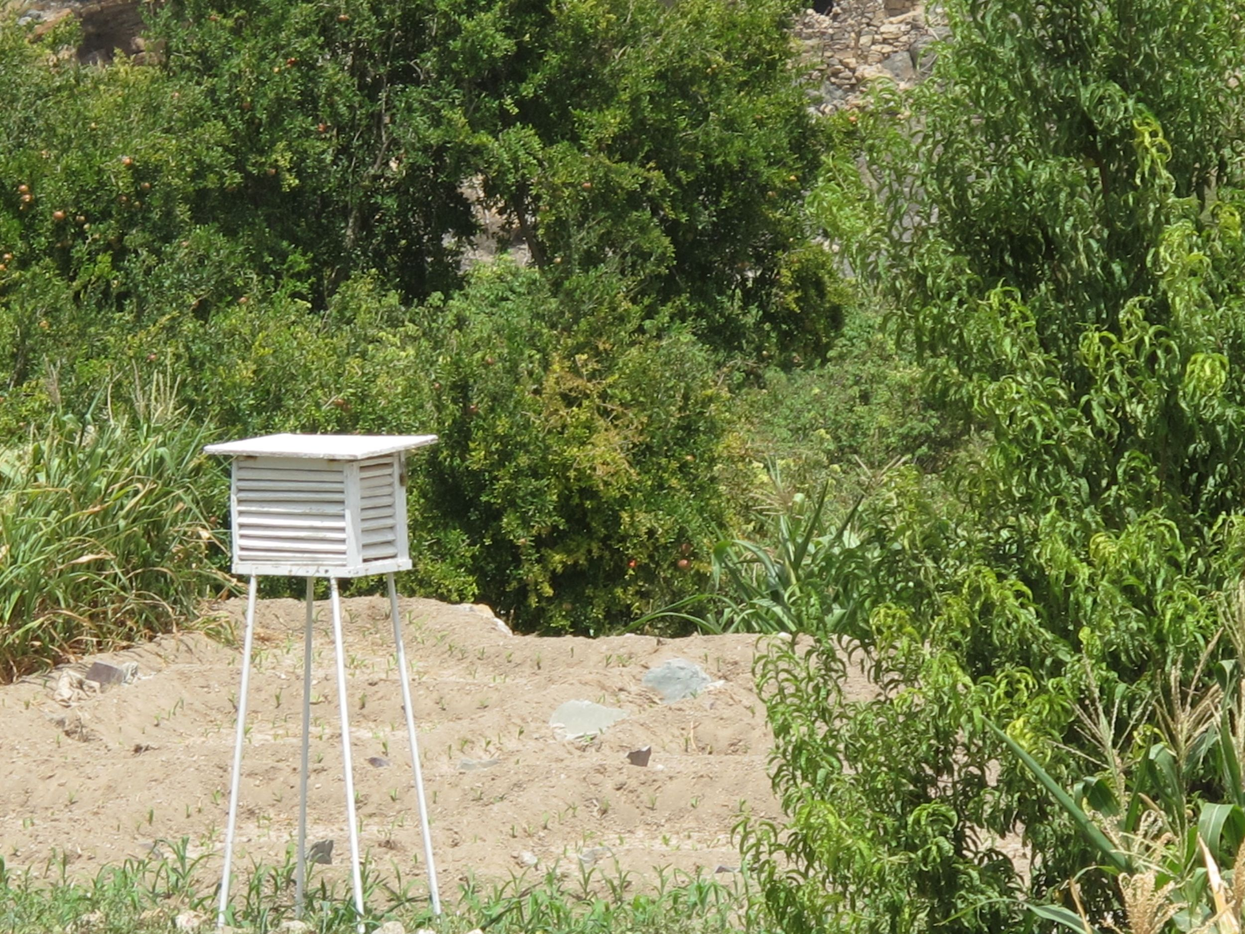 Keeping bees in the fields