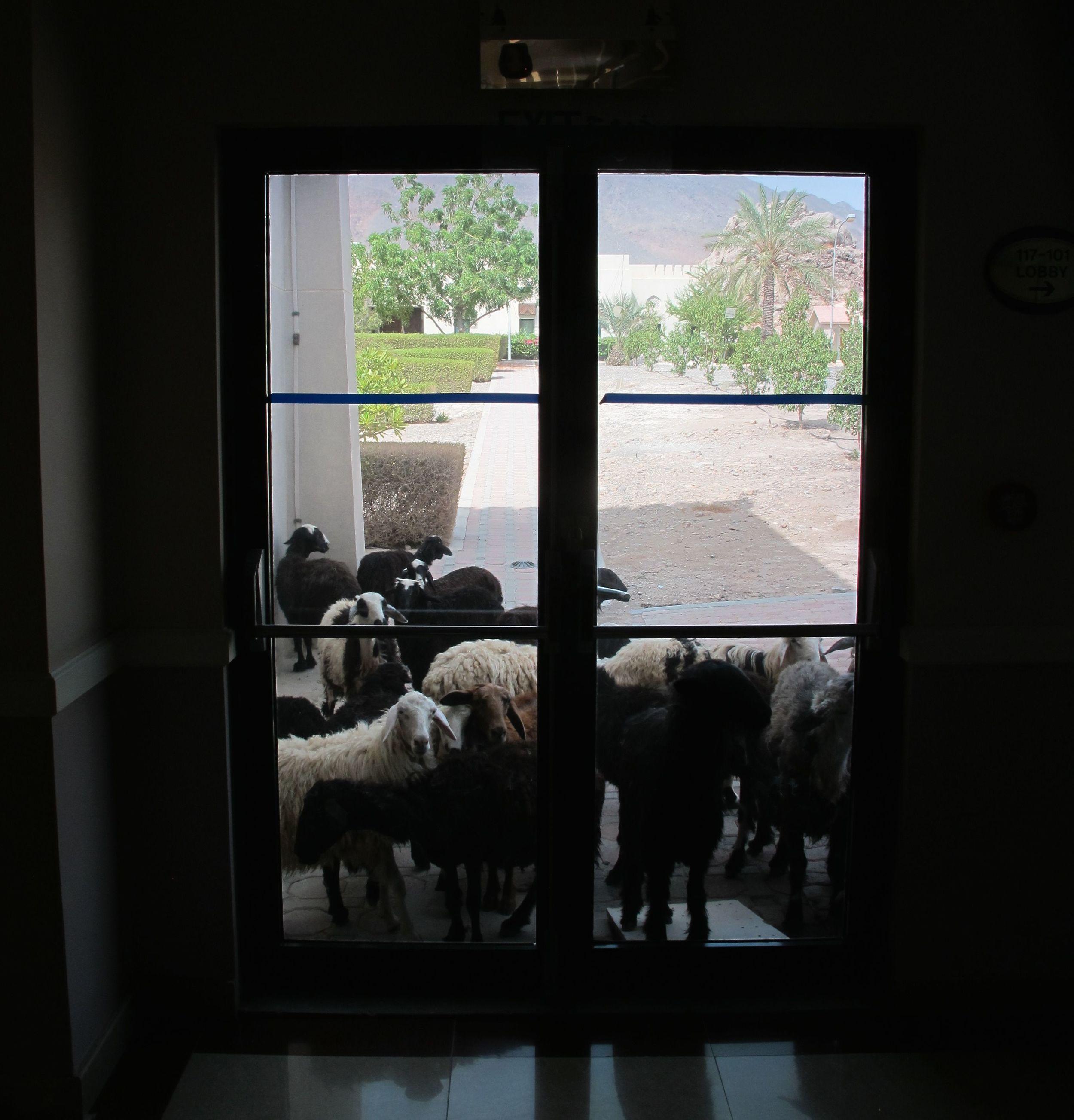 Hotel goats