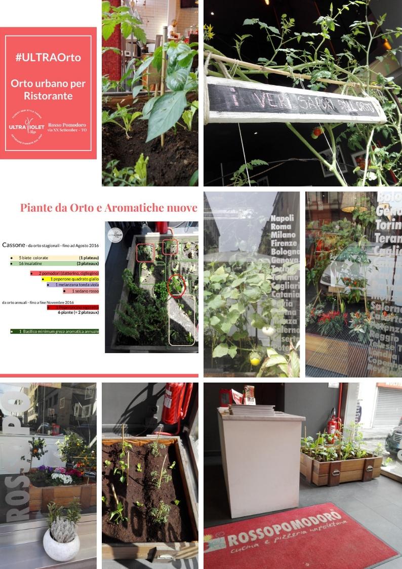 Vegetable Garden for Rosso Pomodoro