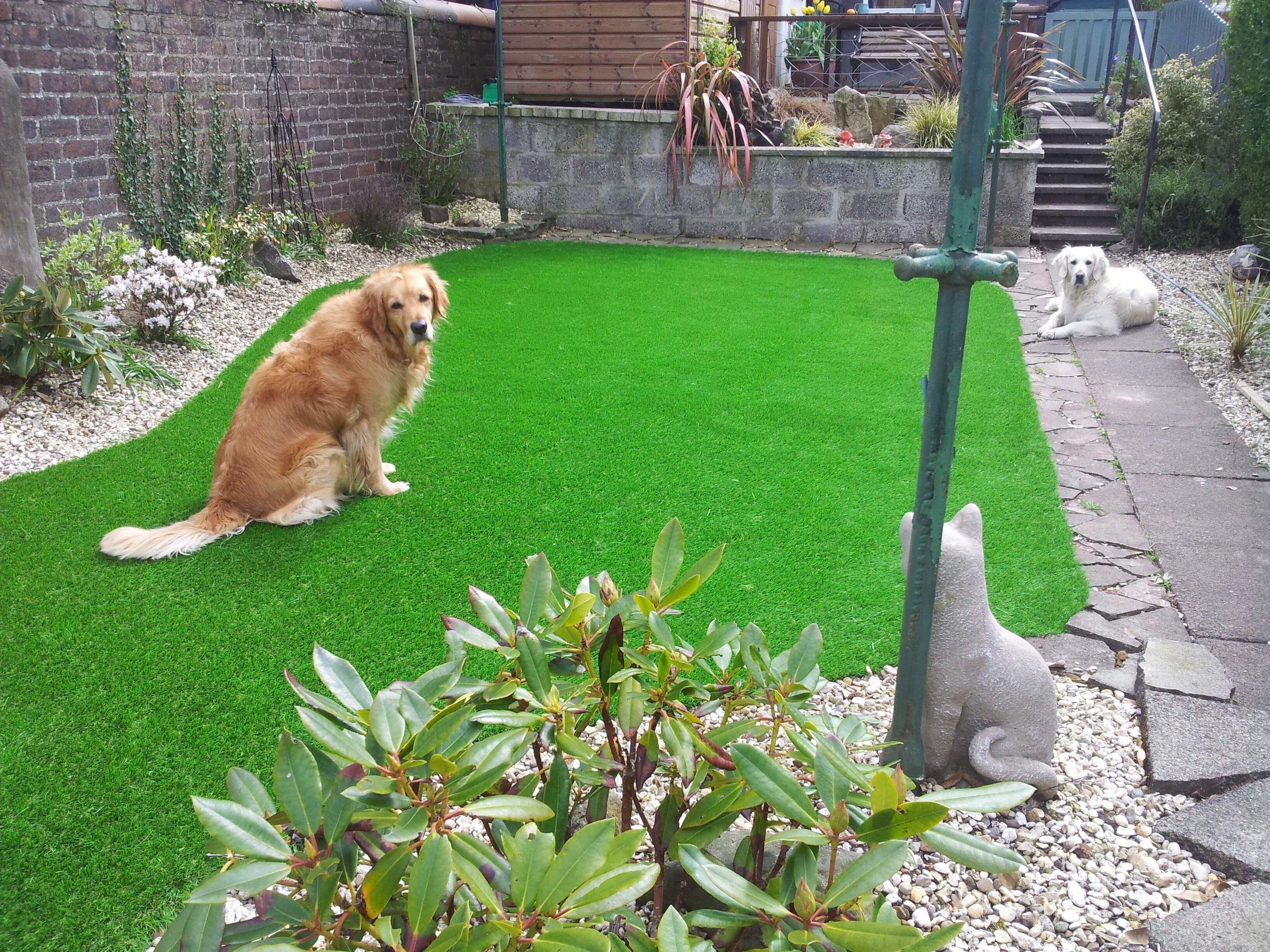 pets-artificial-grass.jpg
