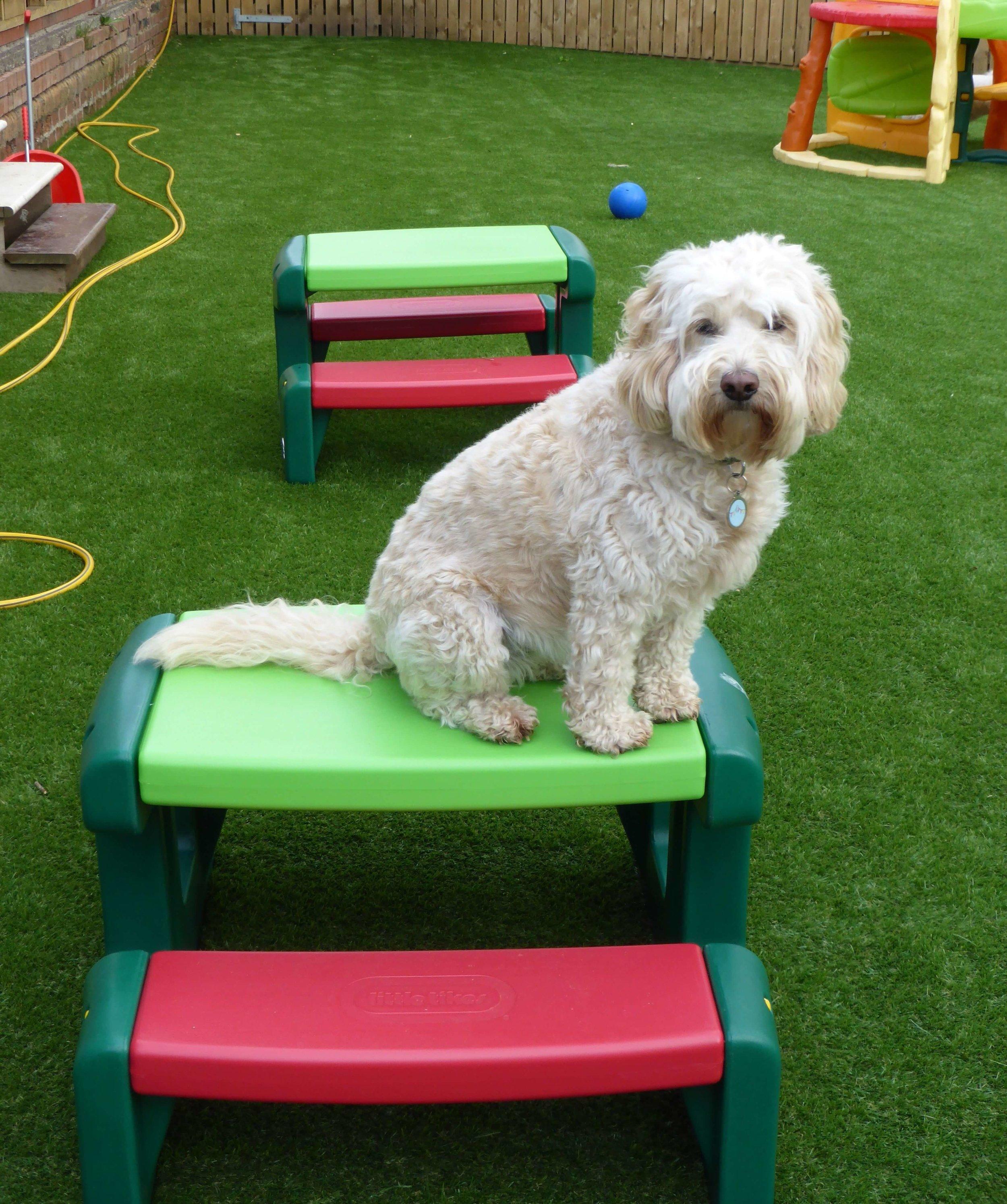 dogs-artificial-grass.jpg