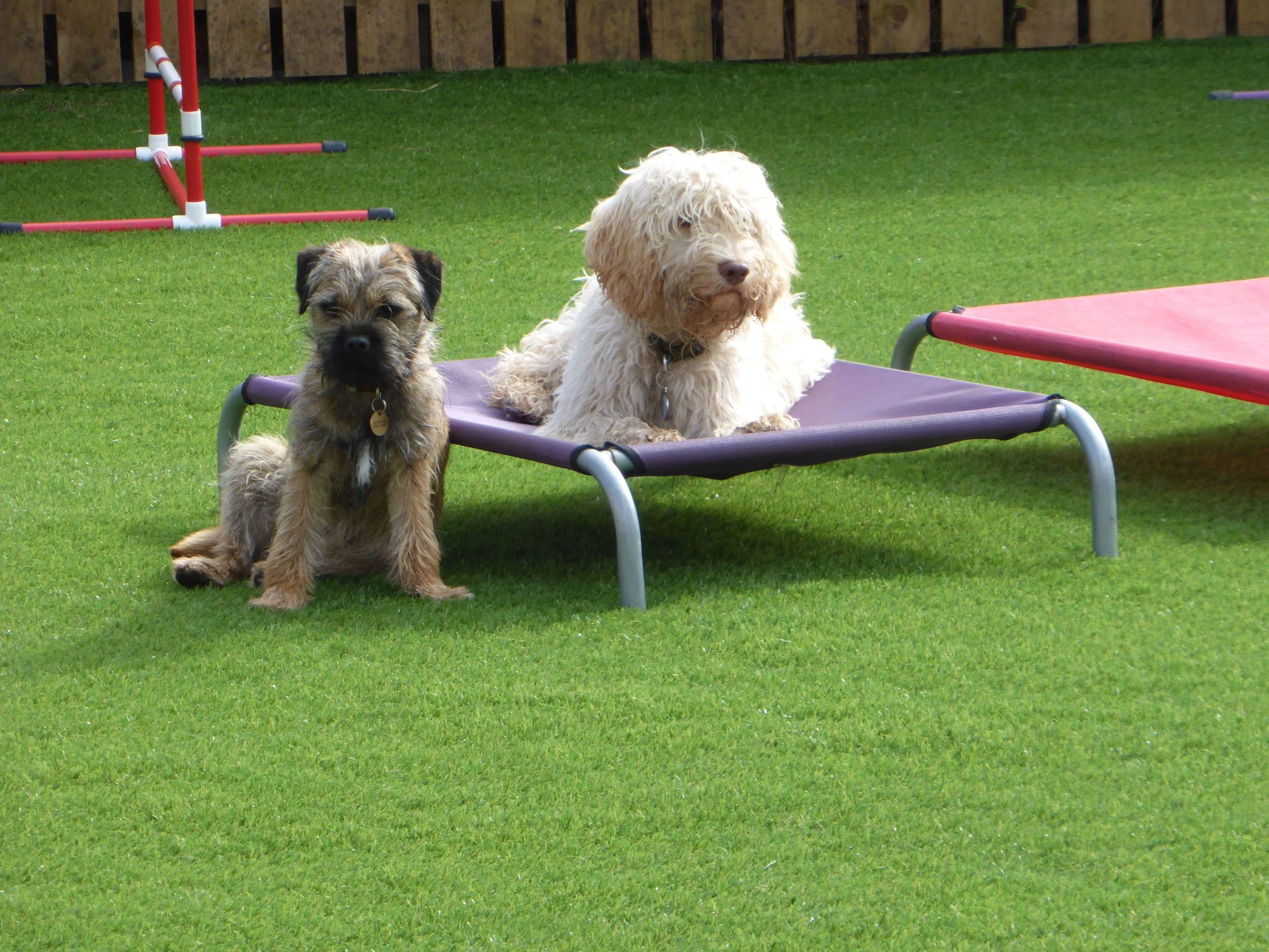 pet friendly artificial grass.jpg