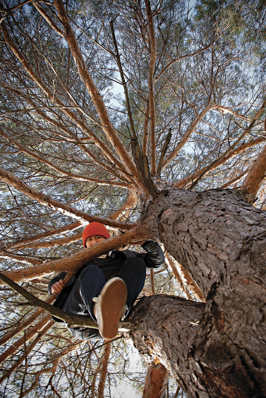 HideSada_Tree_Portrait.jpg