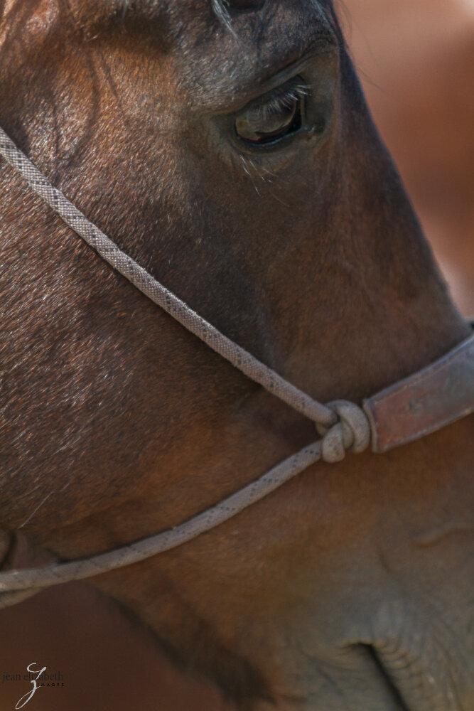 Oct2019 Web Photos20130614_Napa Mustang_0357.jpg