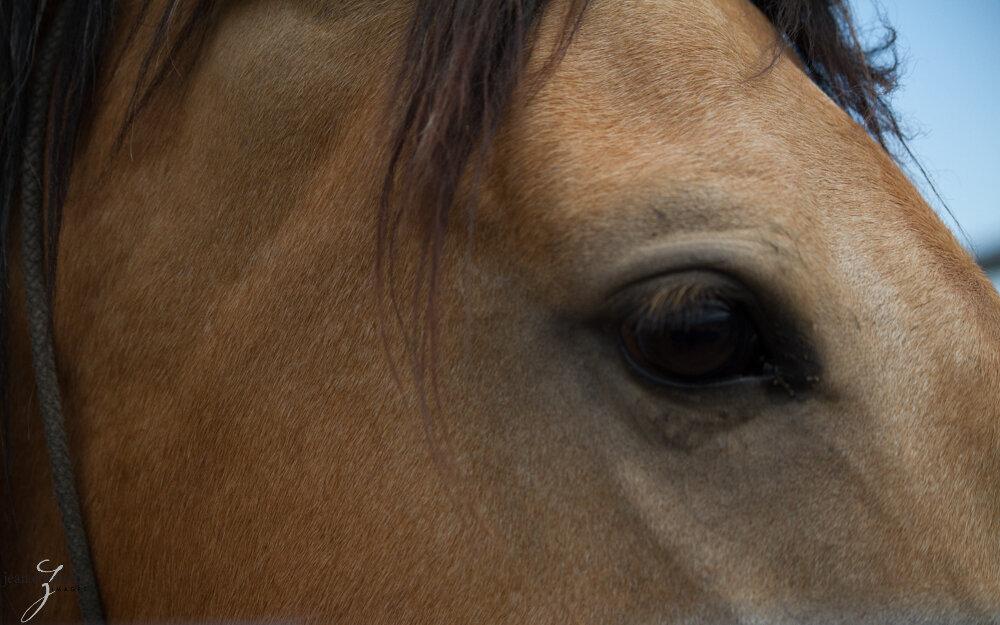 Oct2019 Web Photos20130614_Napa Mustang_0477.jpg