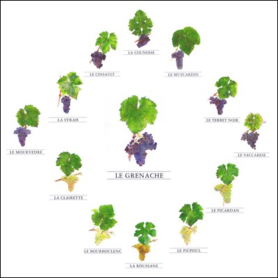 The 13 grapes of Chateauneuf-du-Pape