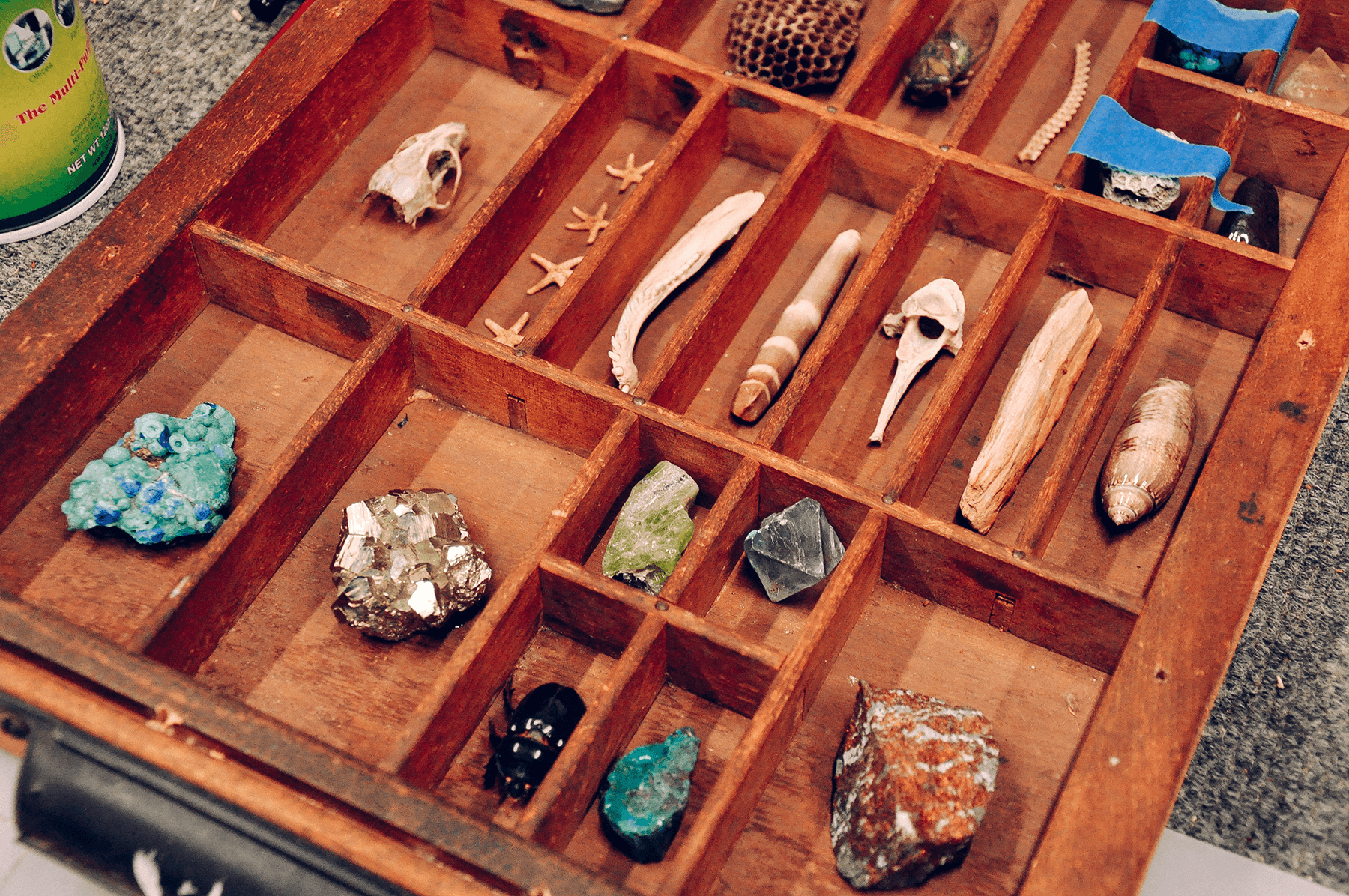 Details from Crystal's exquisite collection foraged artifacts.
