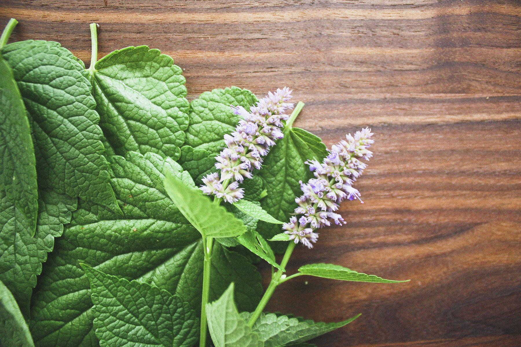 herb_10.jpg