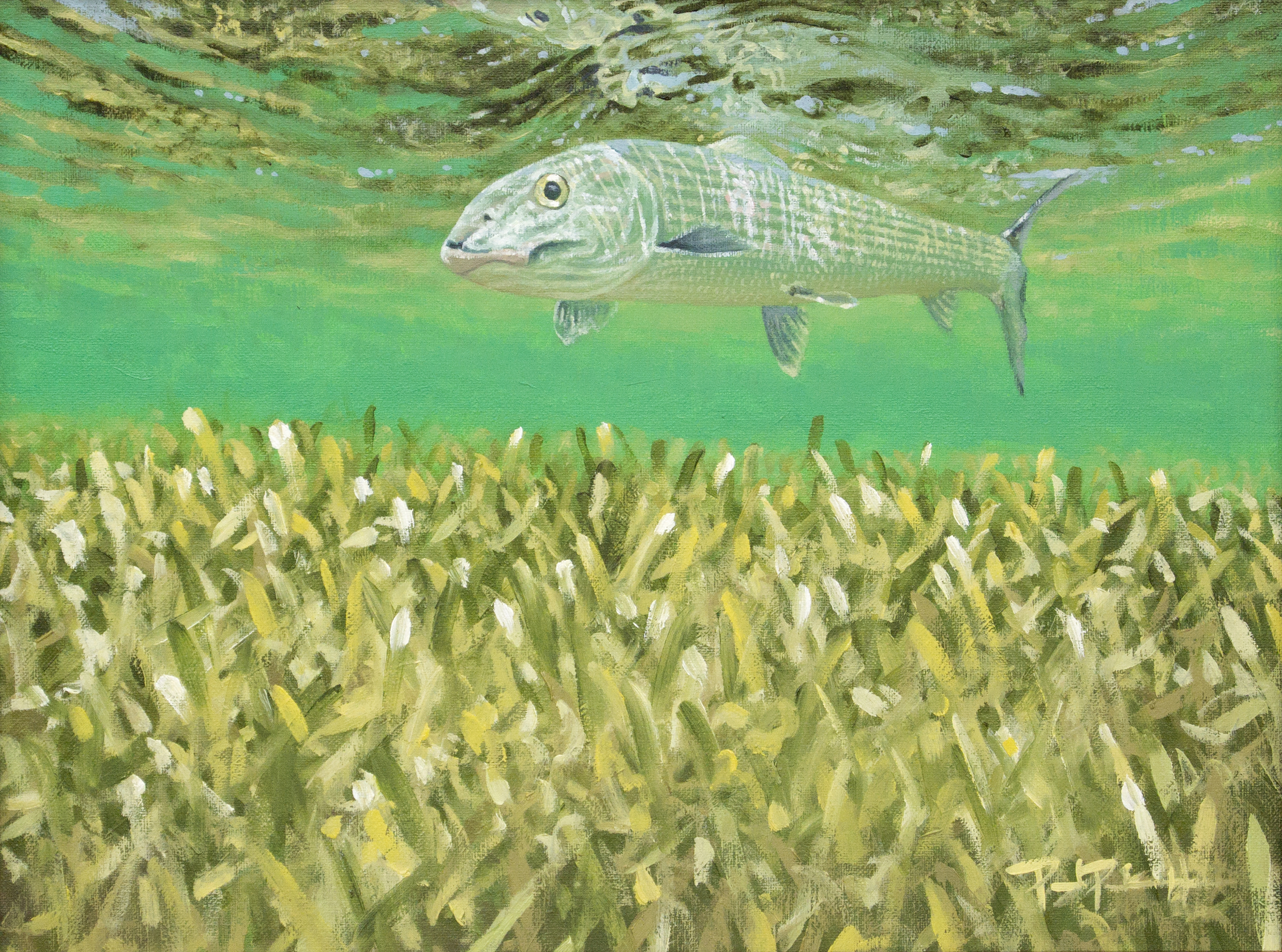 """Bonefish Over Turtlegrass"""