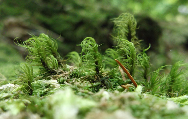 A moss party in the forest.