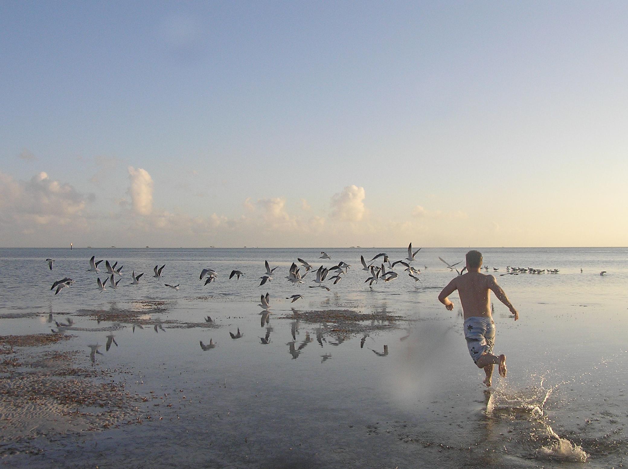 alue optics sunglasses birds sandbar