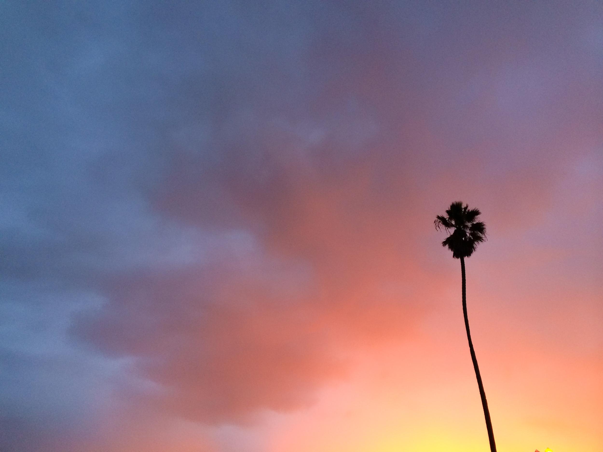 Palm.