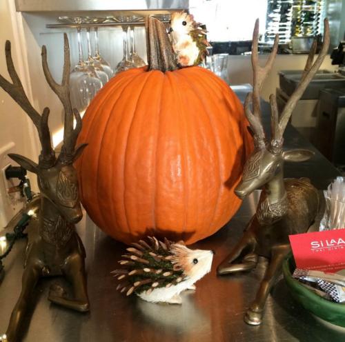 hedgehogs and pumpkin