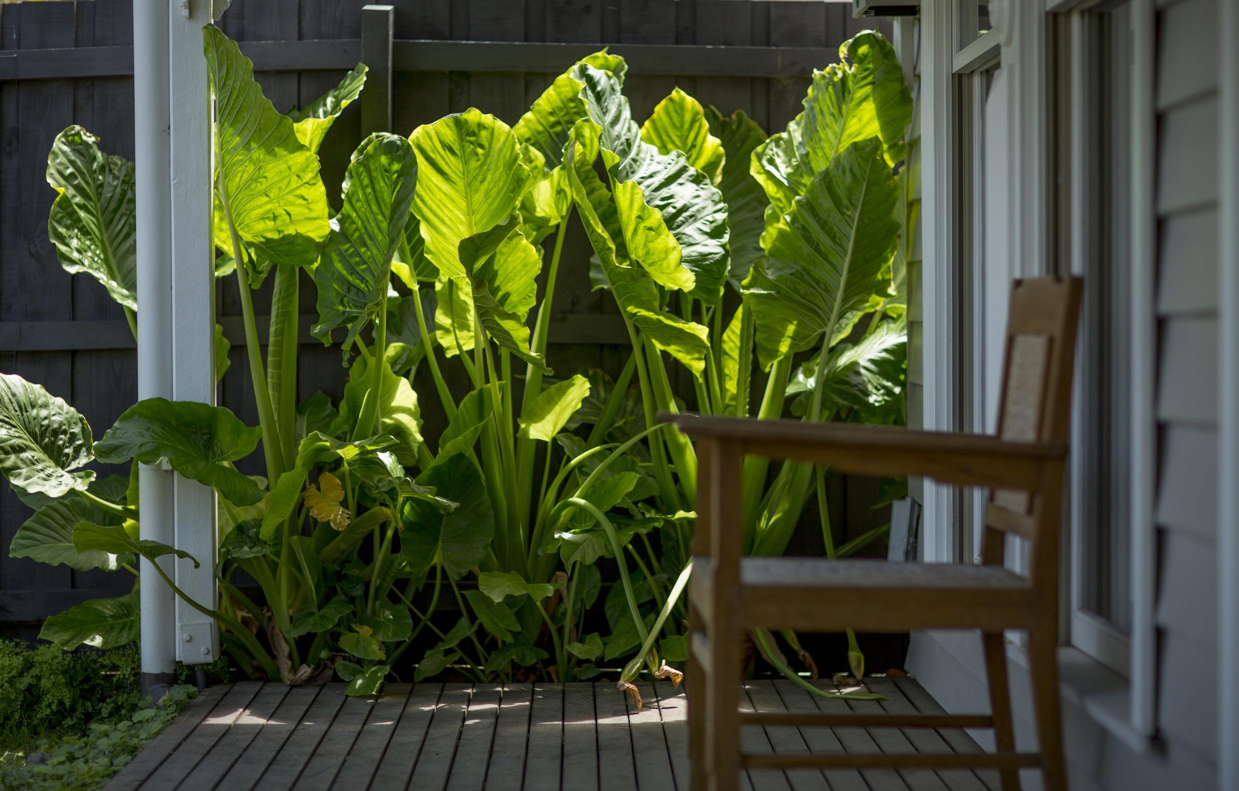 Lush Garden - Balaclava