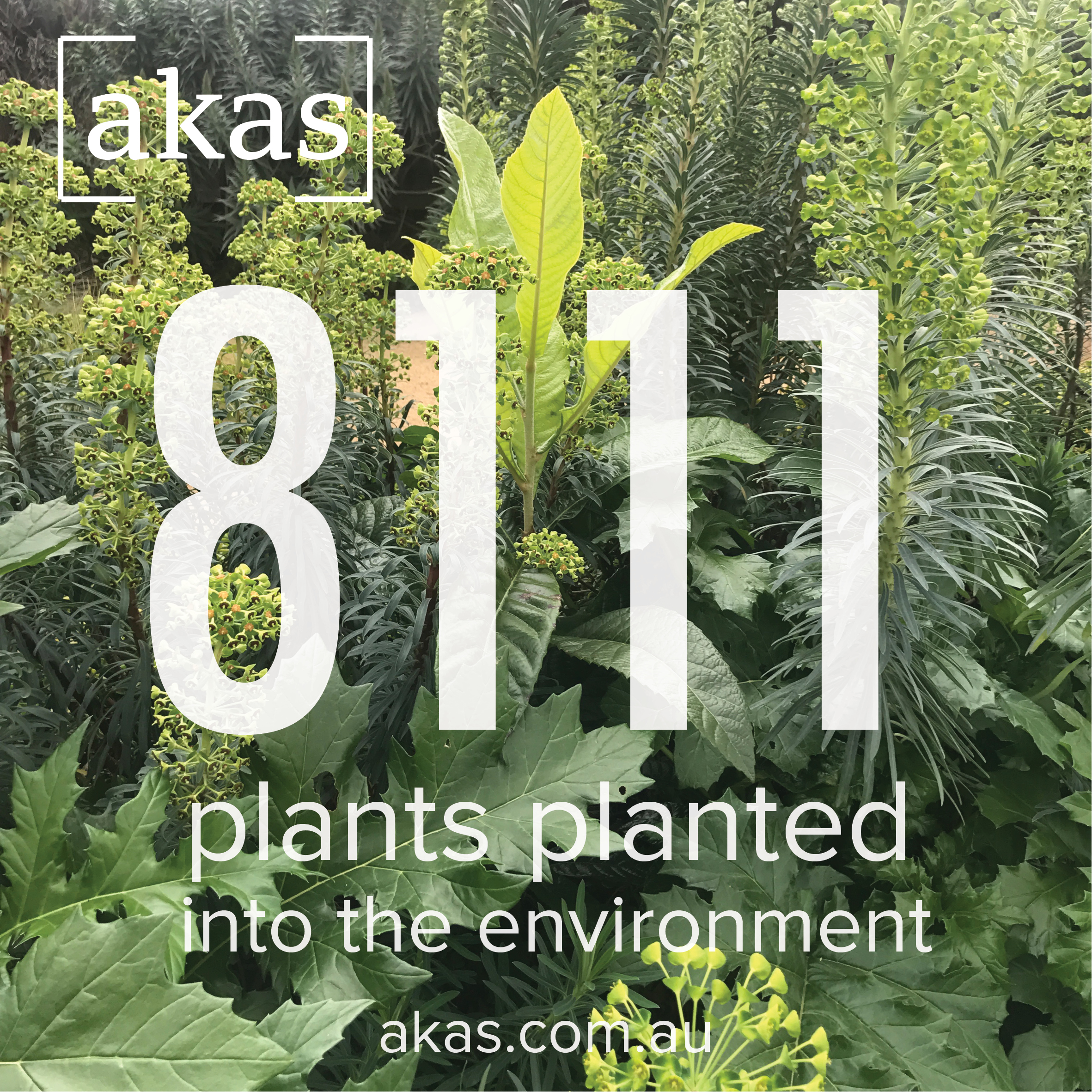 As of August 2018, AKAS has planted 8,111 plants into the environment! Follow us on instagram  @akas_landscape  to follow our journey!