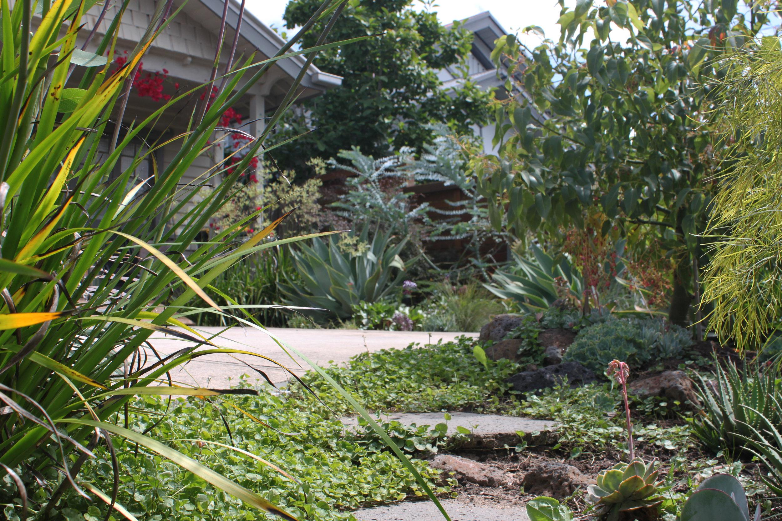 Californian Garden - Brunswick East