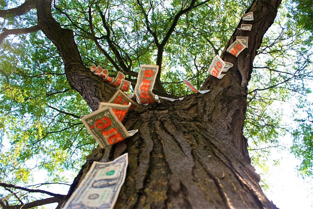 money-tree_22-1024x682.jpg