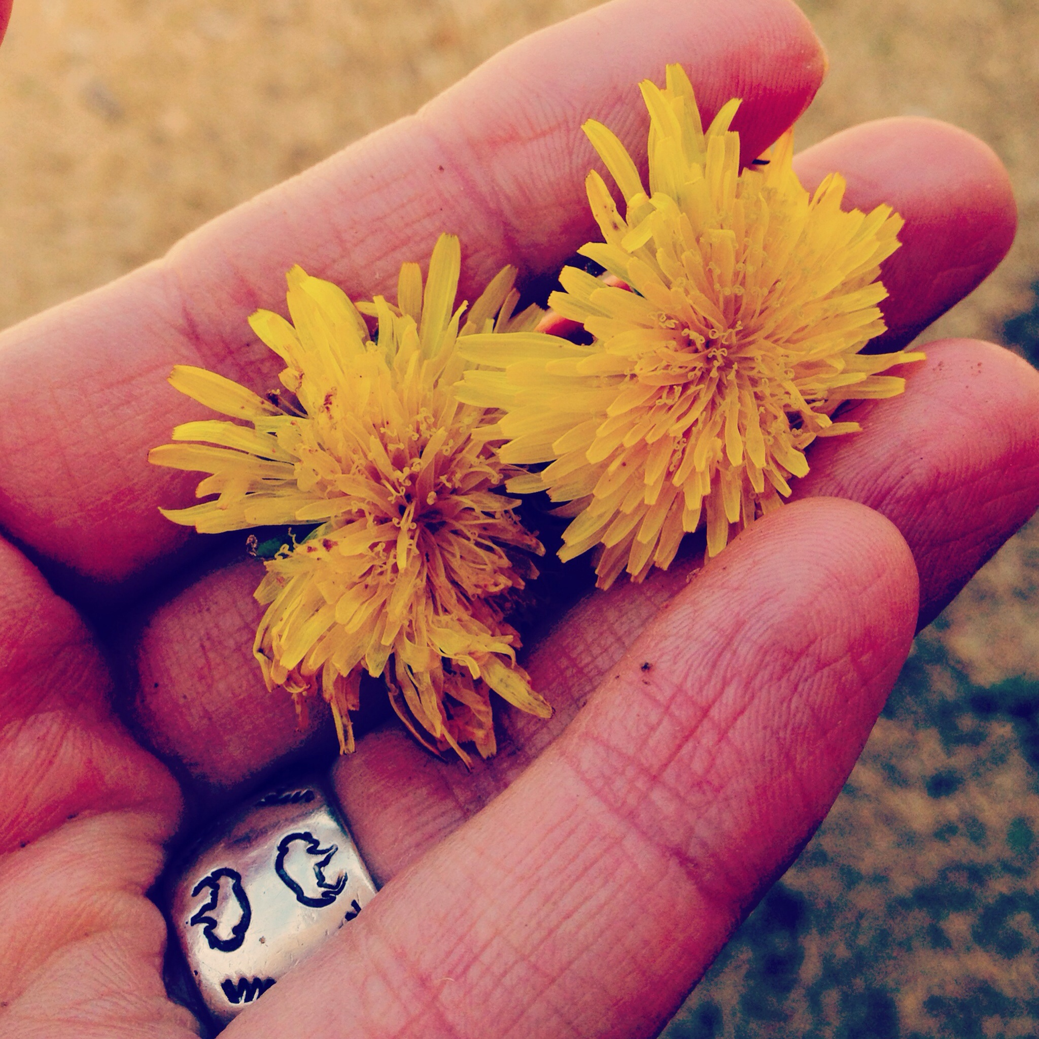 Dandelions from my middle son, age 2. Loving nature comes naturally to him.