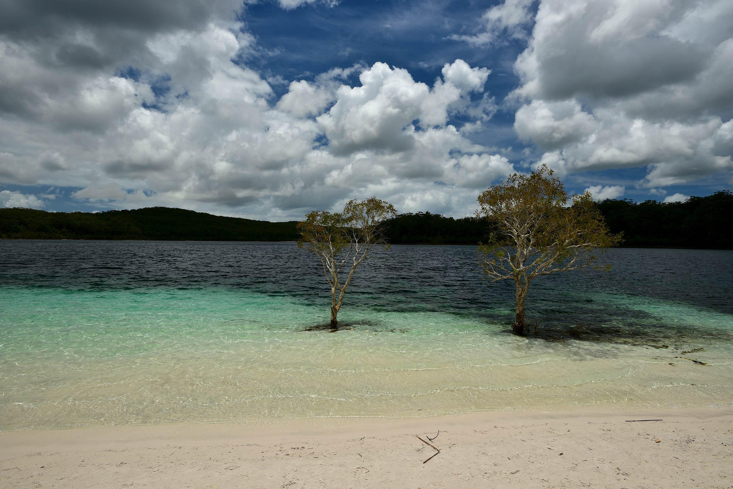 fraser_island_trees_in_water.jpg