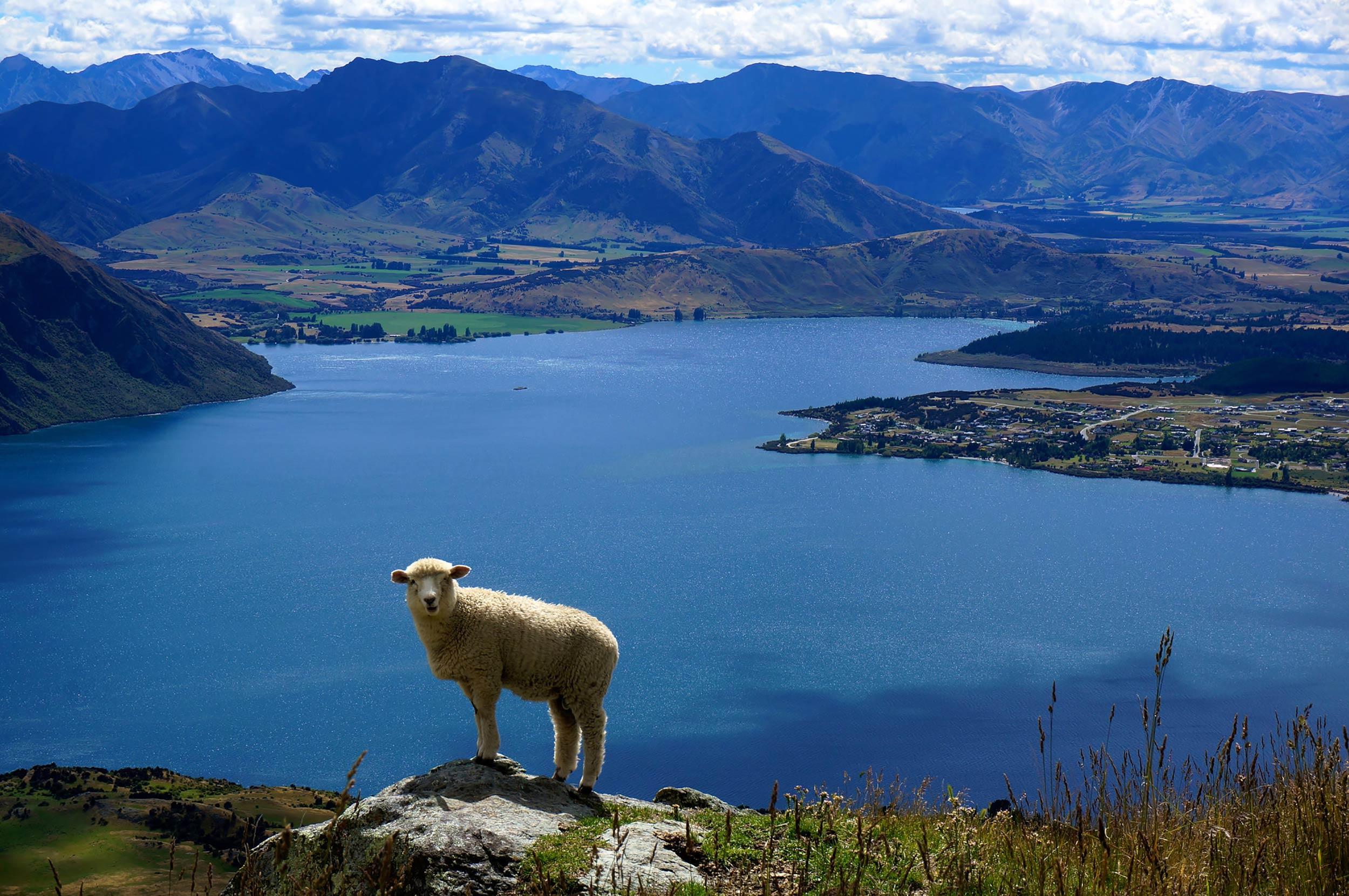 wanaka_roys_peak_lamb.jpg