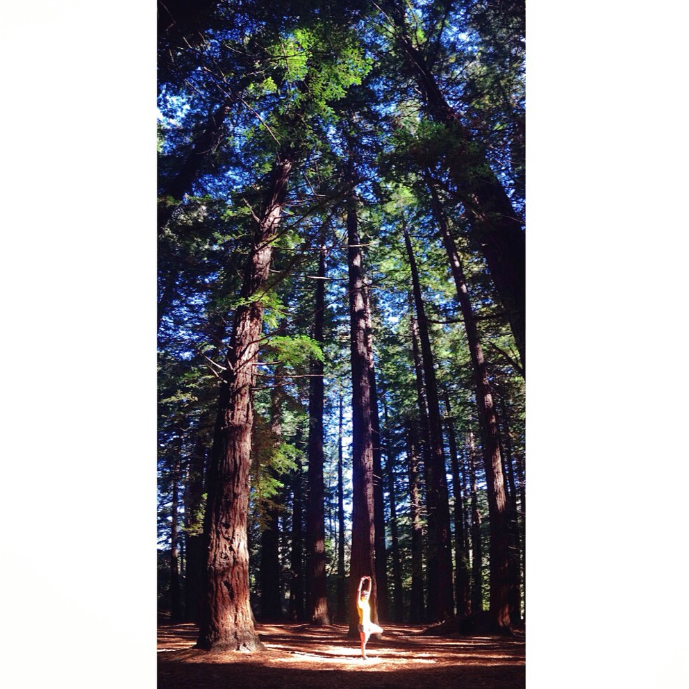 sequoia_grove_candice_yoga_pose.JPG